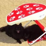 ShadyPaws Pet Travel Canopy 9