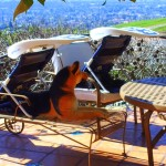 ShadyPaws Pet Travel Canopy 10