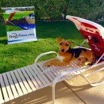 ShadyPaws Pet Travel Canopy 13