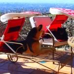 ShadyPaws Pet Travel Canopy 2