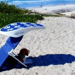 ShadyPaws Pet Travel Canopy 4