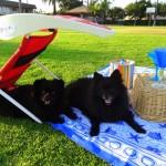 ShadyPaws Pet Travel Canopy 6