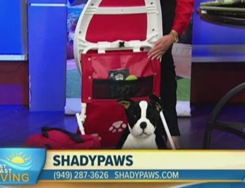 ABC News | First Coast Living | ShadyPaws | Patricia Darquea